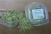 BIO kalčki alfalfa Zeliščni vrt Majnika 50g